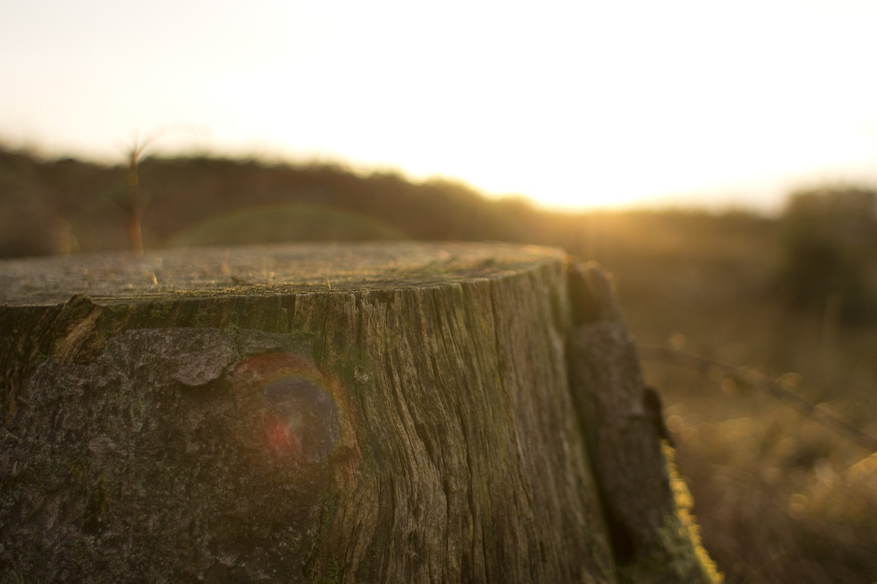 Stump with sunset (or rise) in the background