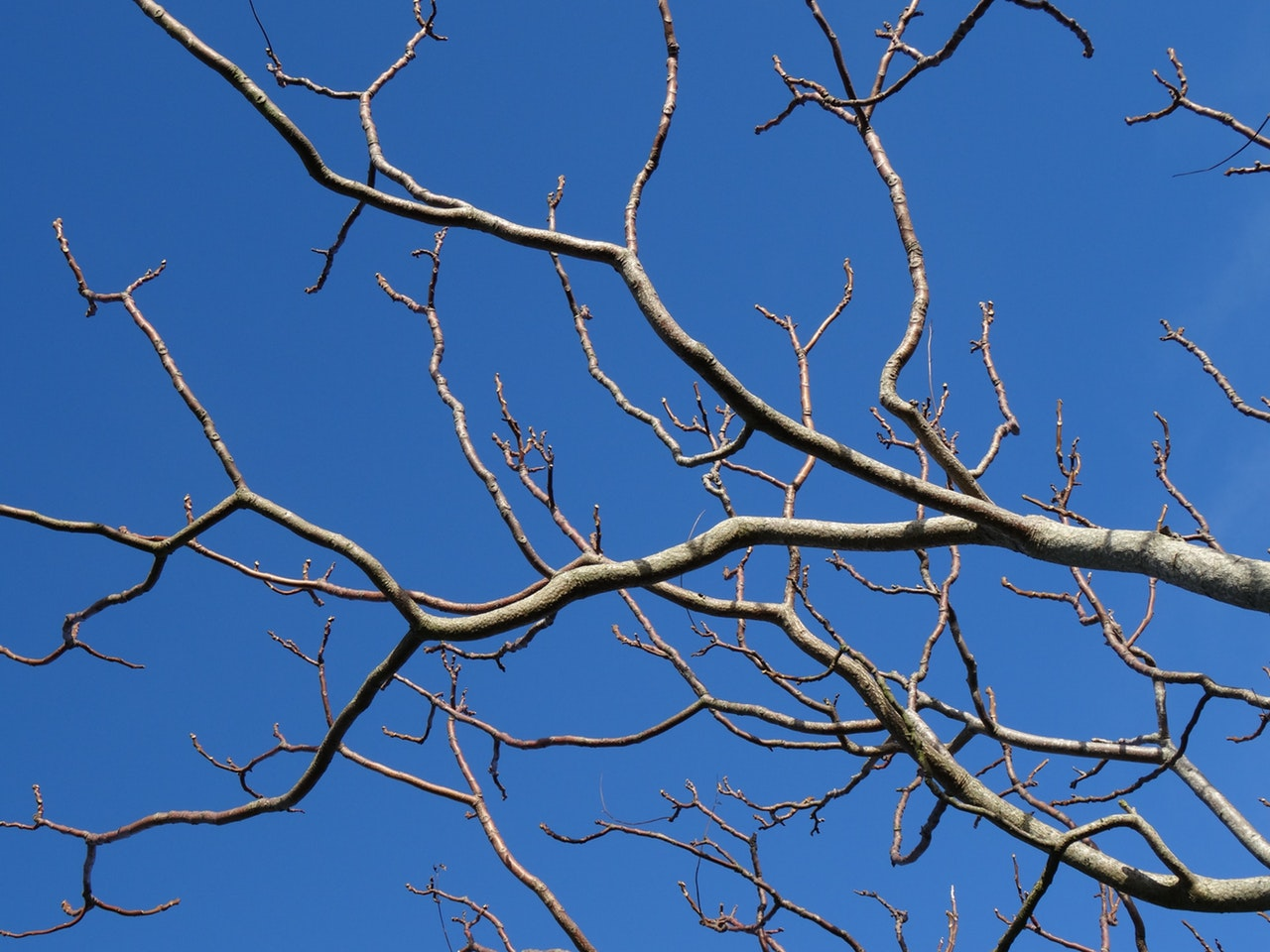 Bare tree branches against a sky-blue background