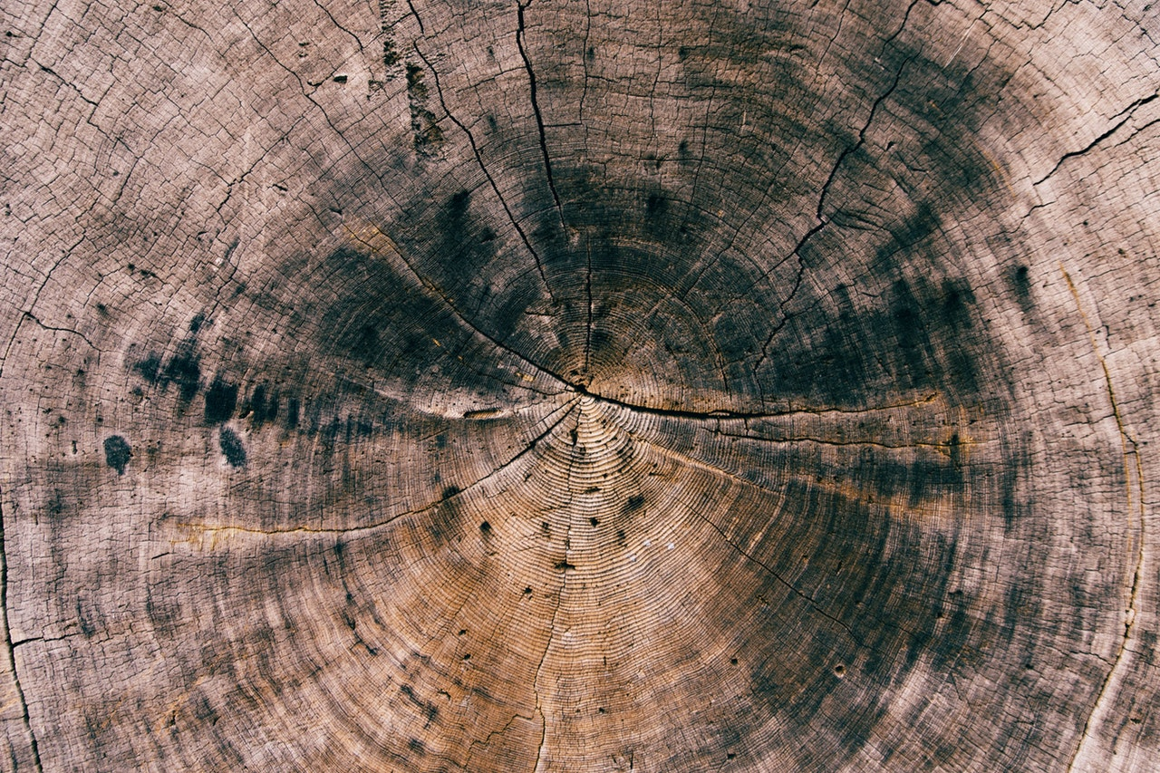Close-up of a stump with black marks in the center